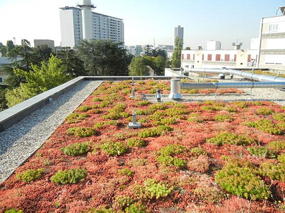 Végétalisation de toiture